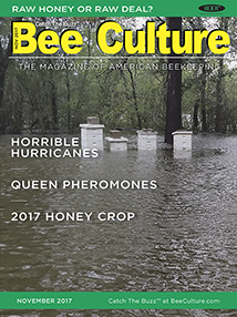 NOV 2017 Cover