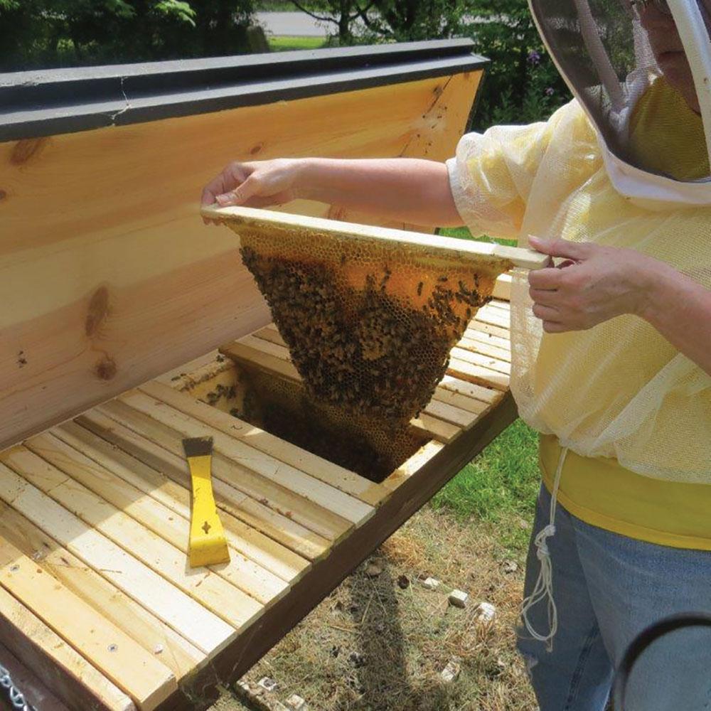 Top-Bar Hive.
