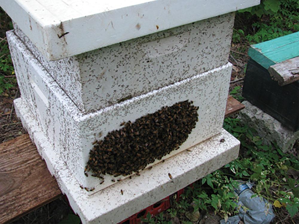 Bermuda: Bees or Bust