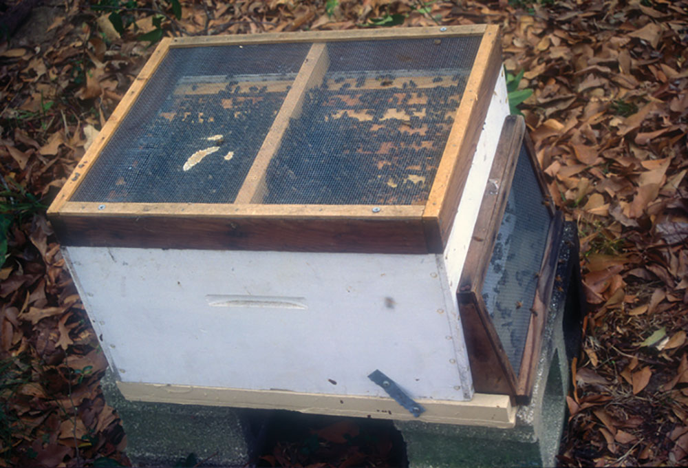 Hive equipment that is securely secreened on top and bottom.