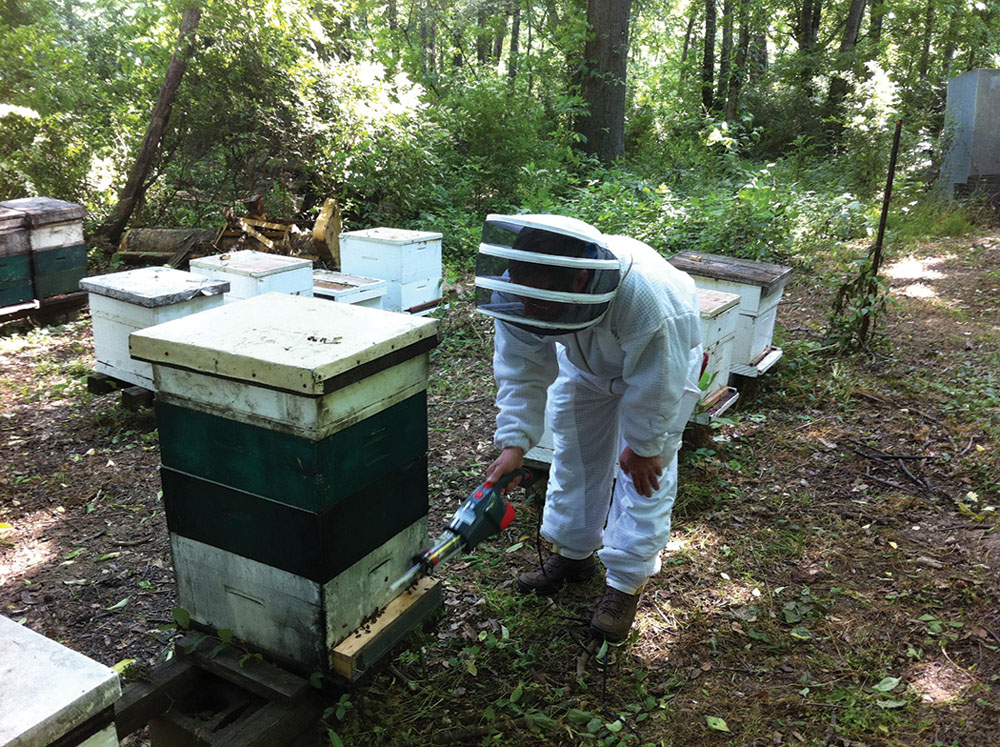 Bee samples.