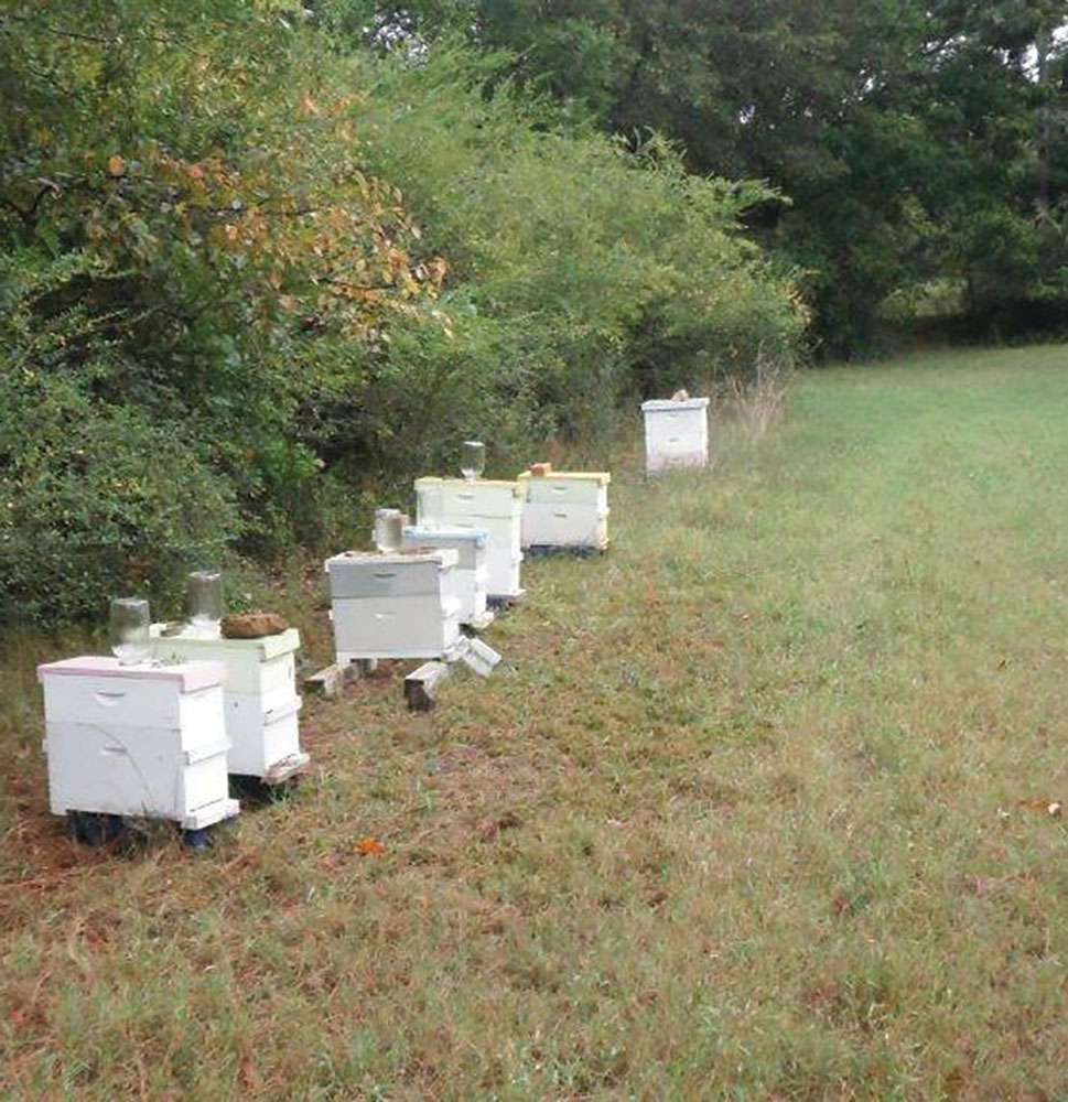 Raising a few nucs to sell or use.