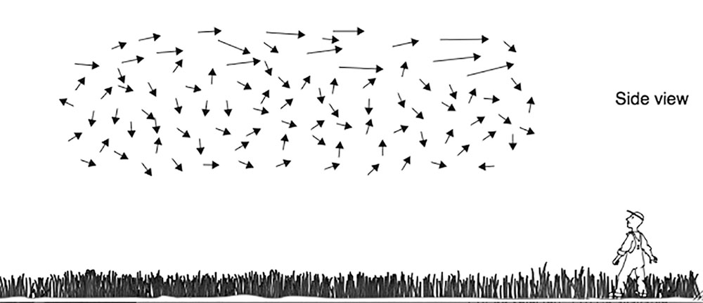 Figure 2. Schematic view of the flight patterns of bees in a swarm flying to the right. Lindauer reported observing streaker bees mainly in the top of the swarm cloud.