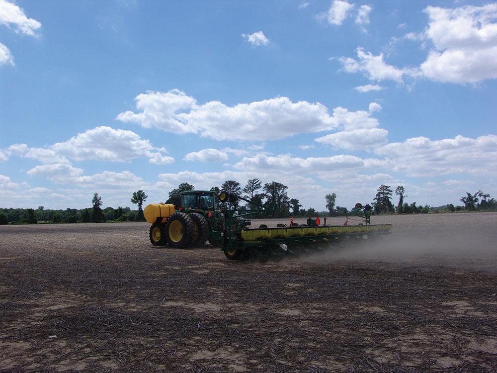 Planter dust.