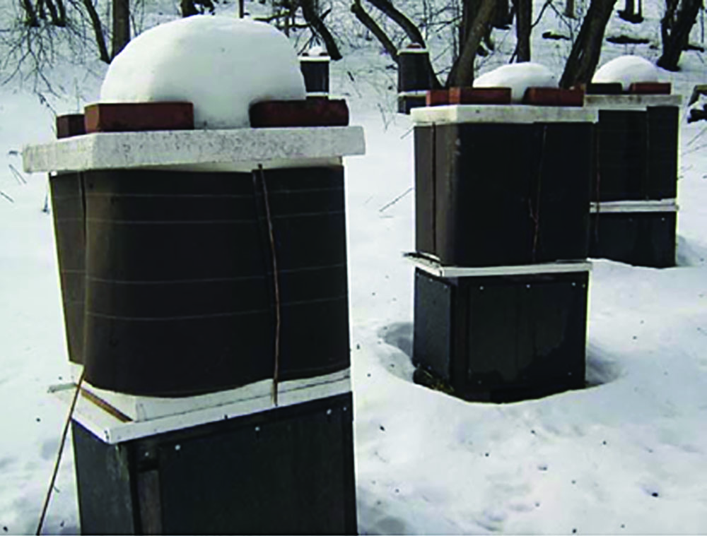 Wintering colonies with protective wrap.
