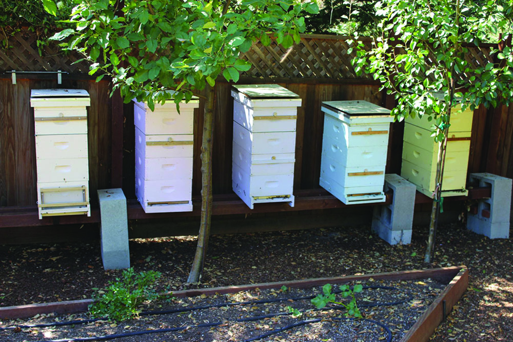 Hives positioned on 4x5 posted and cement blocks.