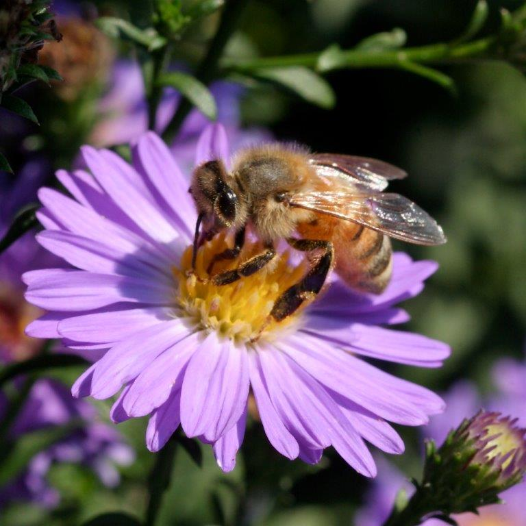 CATCH THE BUZZ – Mounting Evidence Of Pesticide's Danger