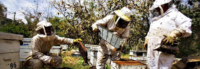 Honey Bee Coalition Buzz
