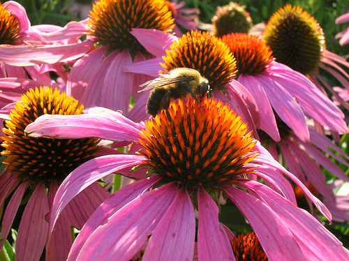 CATCH THE BUZZ -Pollinator Week Brings Focus On Honey Bee Health