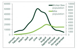 Figure 2. Worker Bee Population (dark green) and Varroa Mite Population (light green) throughout the year.