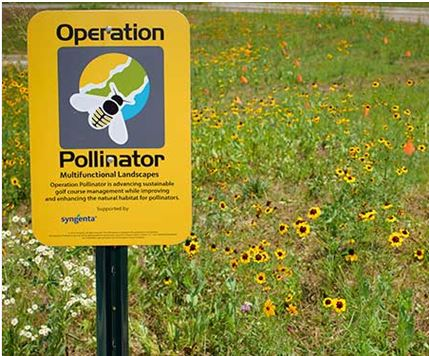 Attract Pollinators #2