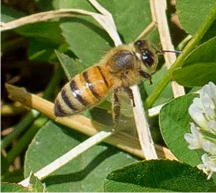 CATCH THE BUZZ – Attract Pollinators To Gardens In 3 Easy Steps