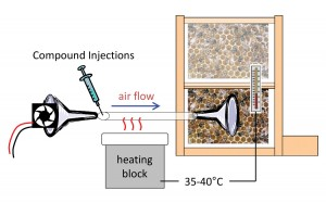 Figure 3. Experiment to determine whether dance compounds affect foraging behavior. The compound mixture was injected into heated tubing through which it was blown by a fan onto the dance-floor area of the observation hive. Heat was adjusted so outflowing air matched normal beehive temperature. Foraging behavior was measured by monitoring bee arrivals at a feeder dish.
