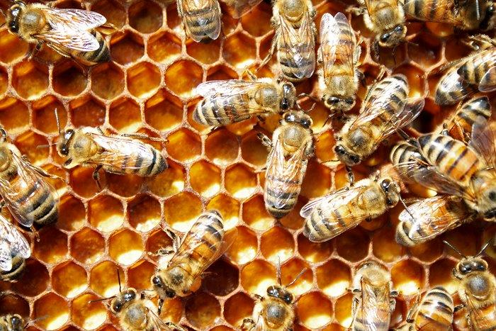 CATCH THE BUZZ – It Takes More than Royal  Jelly To Make A Queen