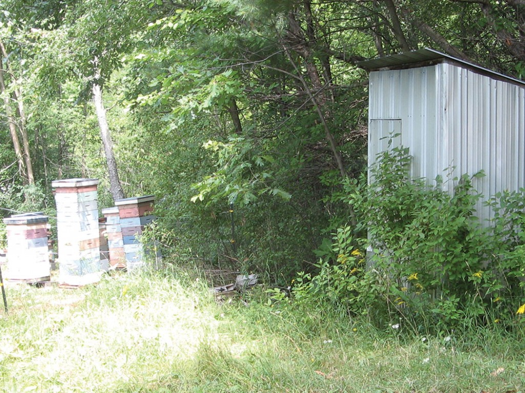 A small shed by the apiary makes a convenient place to store empty supers and equipment that is not in use.