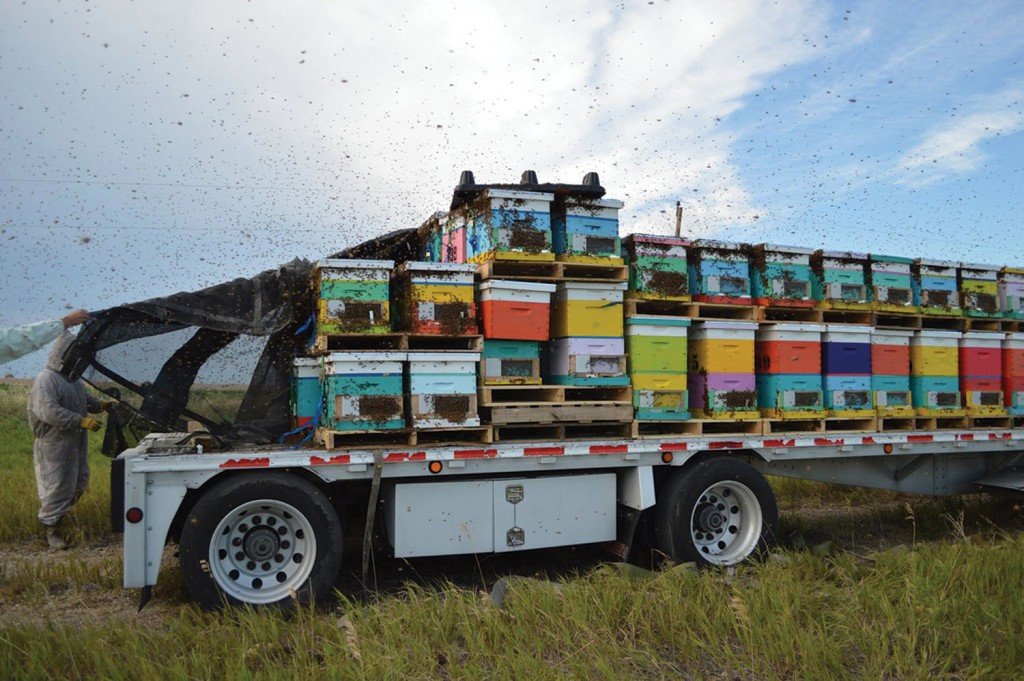 The bees finally arrive in South Dakota, and they are not excited about travel.