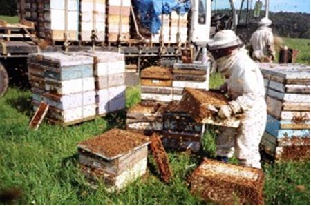 CATCH THE BUZZ – It's Beekeepers That Are In Trouble, Not So Much The Bees….