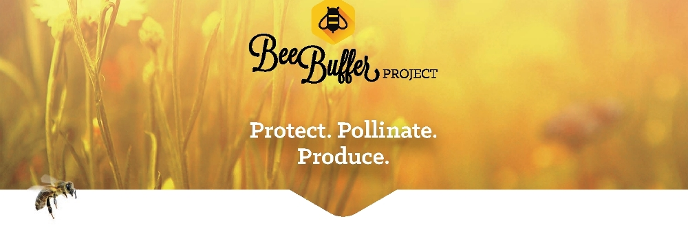 Bee Buffer Projects BUZZ