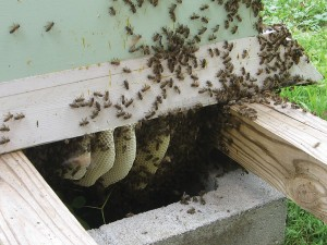 Bees will do the darndest things.