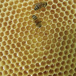 Footprint pheromone is everywhere in a hive.