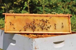 Light honey combs.