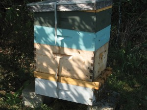 Rather than try and force the bees to do what I wanted them to do, I let them do what they wanted but do it in a super with frames of comb that can be easily moved up above the bottom board before Winter.