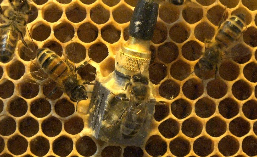 CATCH THE BUZZ – Vibrations In A Colony Tell A Story