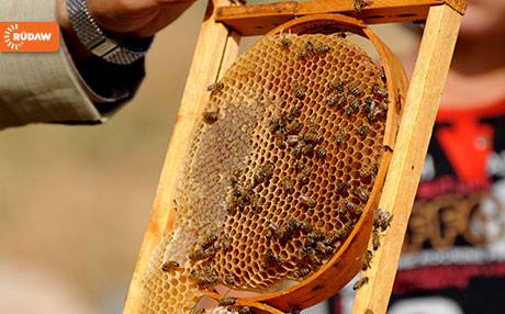 CATCH THE BUZZ – ERBIL, Kurdistan Region – War In Iraq Is A Buzzkill For Honey Production In The Country.