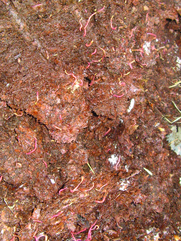 Well made compost and especially humus is full of biological activity (and worms), as well as carbon in the form of organic matter. Plants grown in such soil tend to resist diseases, droughts and floods and are able to remove carbon dioxide from the atmosphere and sequester the carbon in the ground.