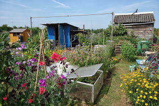 Allotment Plot - BUZZ