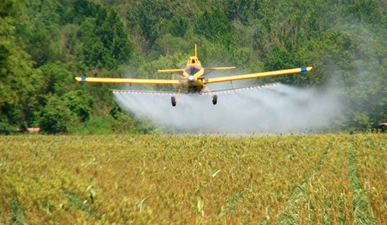 CATCH THE BUZZ – Old Herbicides Used Because The New Ones Don't Work. Bad News.