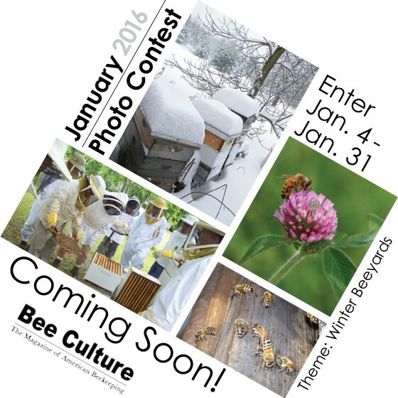 CATCH THE BUZZ – New Photo Contest Coming To Bee Culture's Web Page!