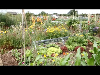 CATCH THE BUZZ – A Year on a Wildlife-Friendly Allotment Plot