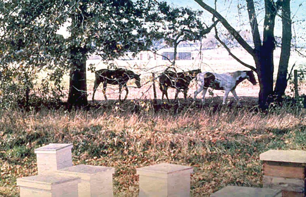 Useless Photo 1 – Horses around beehives. Circa 1979.