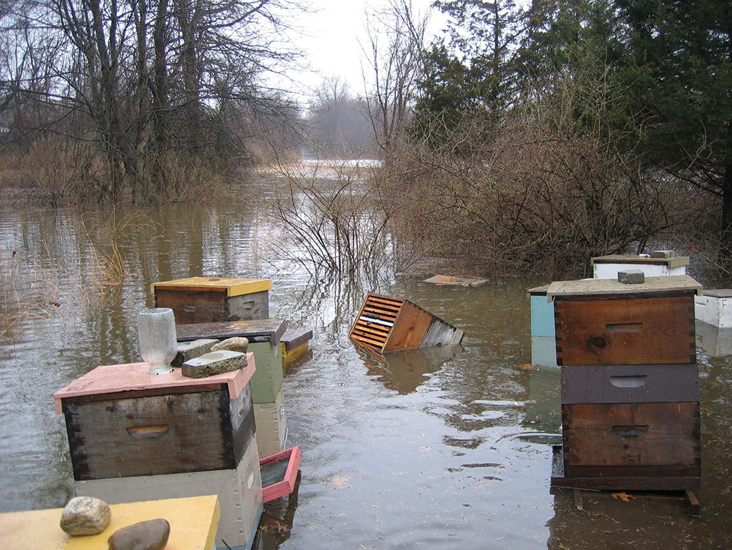 Flooding had never happened in this yard. The river is nearly a mile away. (Ted and Becky Jones photo)