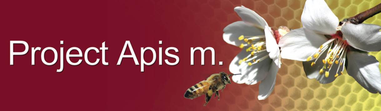 Apis M - BUZZ
