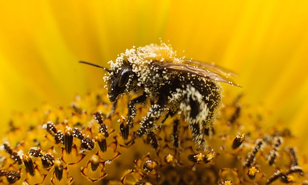 CATCH THE BUZZ – Bayer Revises Position to Propose Extra Protections for Bees from Pesticides