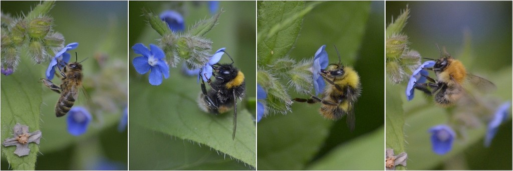 CATCH THE BUZZ – Where Have All the Flowers Gone: Complexity & Worldwide Bee Declines
