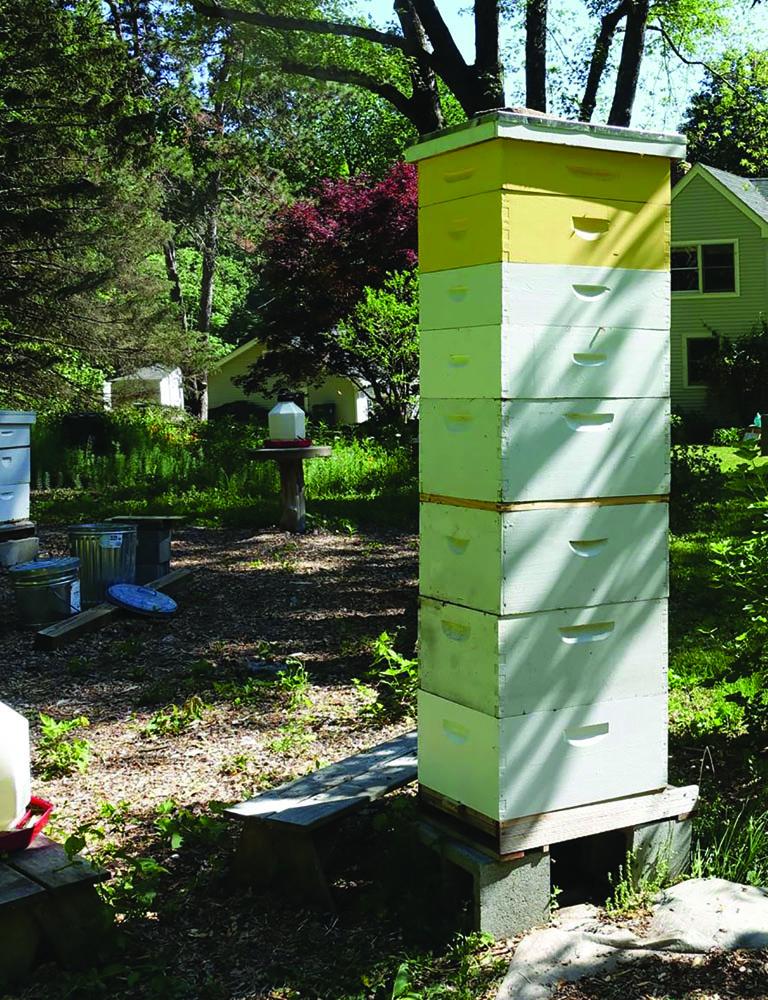 Wooden Apis Mellifera Bee Queen Excluder Beekeeping Equipment