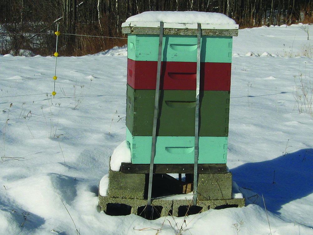 This hive is located at a high elevation in the Green Mountains of Vermont and has no wind break to protect it from exposure to strong winds on a regular basis. Instead, it has been strapped to four concrete blocks at the base which help prevent the hive from being blown over.