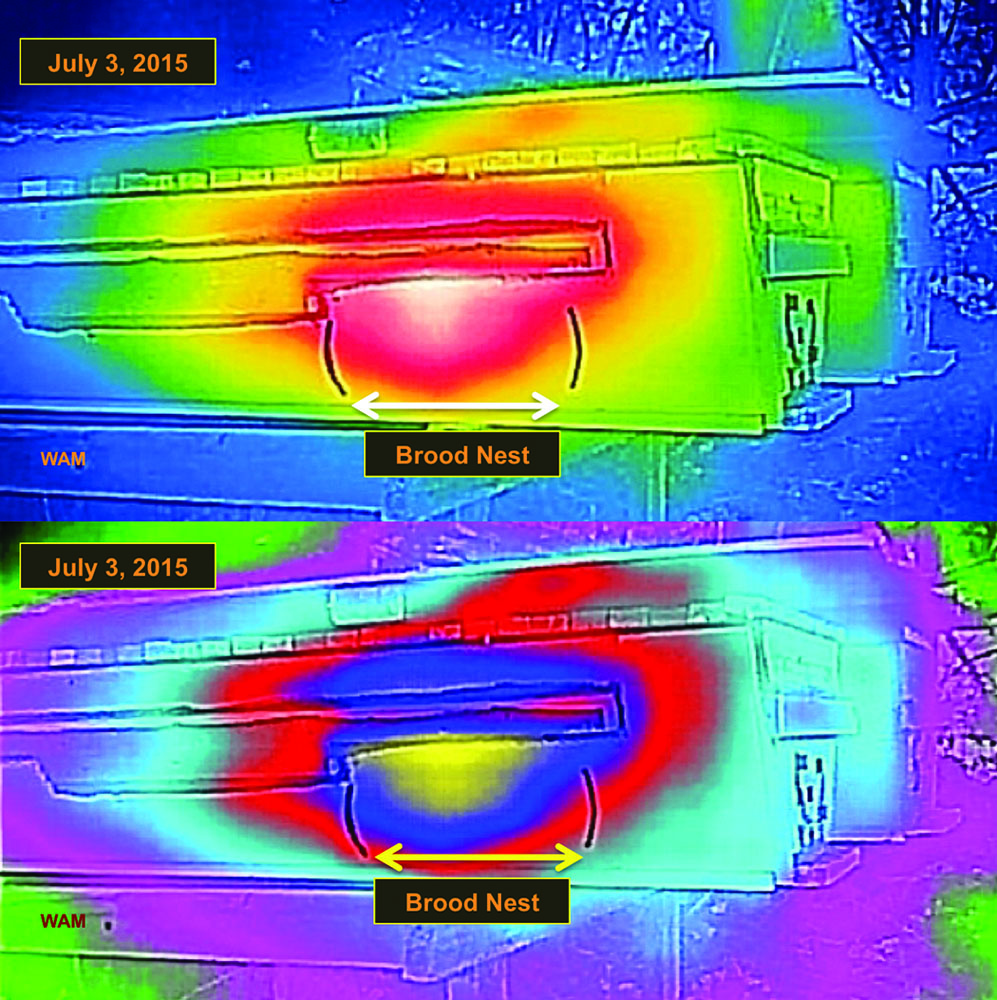 Figure 4 A side view of the same top-bar hive in two heat scales.  The hottest color is white (upper) and yellow (lower), and then the colors become cooler the further from the marked brood nest.  The thermal heat image of the brood nest matched the physical placement of the observed brood nest between the vertical boundary marks, which did not happen in one case (see below).