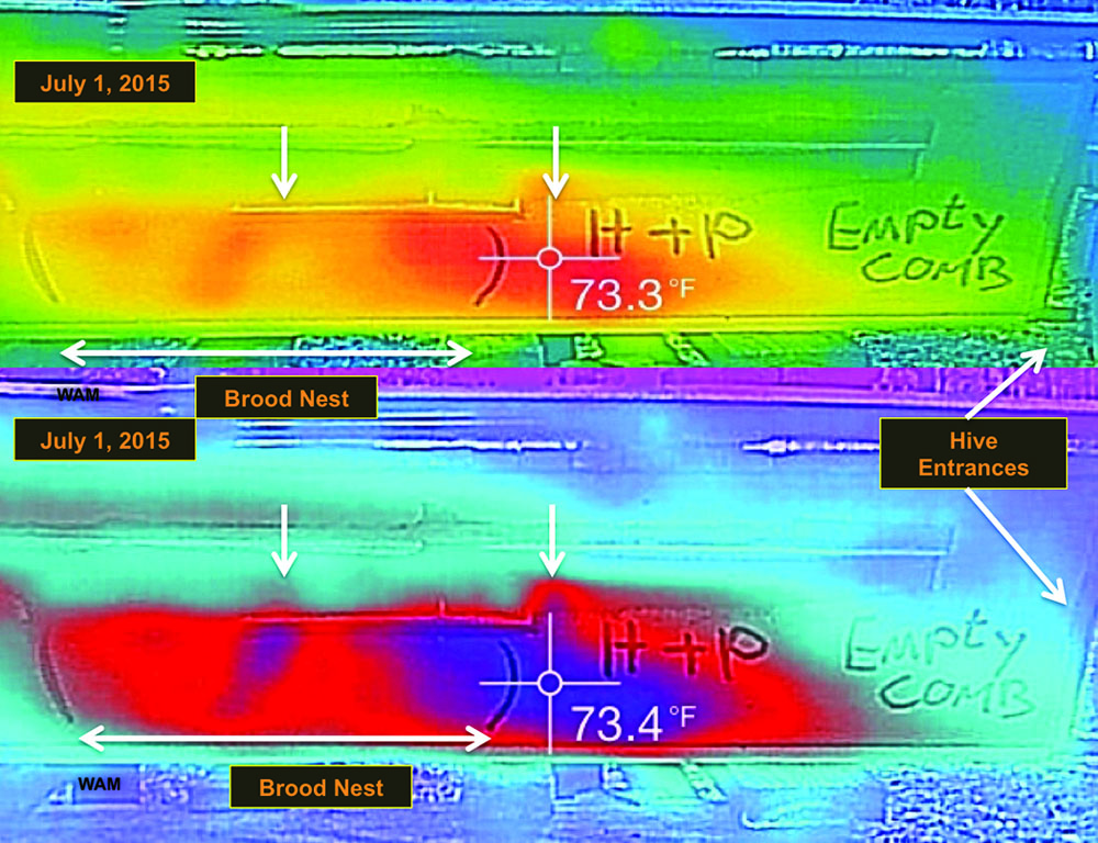 Figure 6 A partial mismatch and no concentric tight bands of cooler temperatures. A side view of a five-foot long hive oriented like Figure 3 with the brood nest marked the same along with the two heat color scales, except above red was the warmest (no white), and below, blue was the warmest (no yellow), perhaps because conditions were not hot enough in the hive.  The warmest areas red (above) and blue (below) had shifted into combs marked honey and pollen (H&P).  The brood nest pattern appeared normal.  The small vertical downward pointing white arrows indicated subtle features in the two heat signatures, best seen in the lower heat scale.