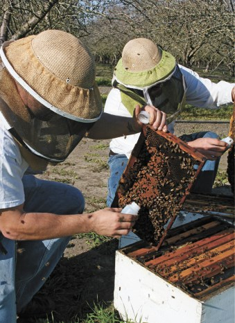 CATCH THE BUZZ – Bee Informed Partnership – BIP – Leads to Healthy Hives