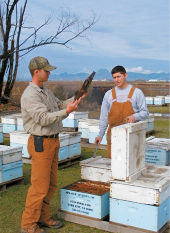 Beehive Thefts Add to Pressures at Bloom Time - BUZZ