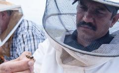 CATCH THE BUZZ – Better-Fed Honey Bees Fight off Harmful Effects of Parasite