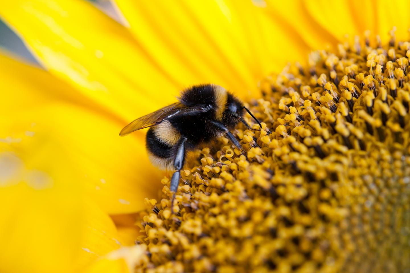 CATCH THE BUZZ – Small Farms Benefit Significantly From a Few Extra Pollinators