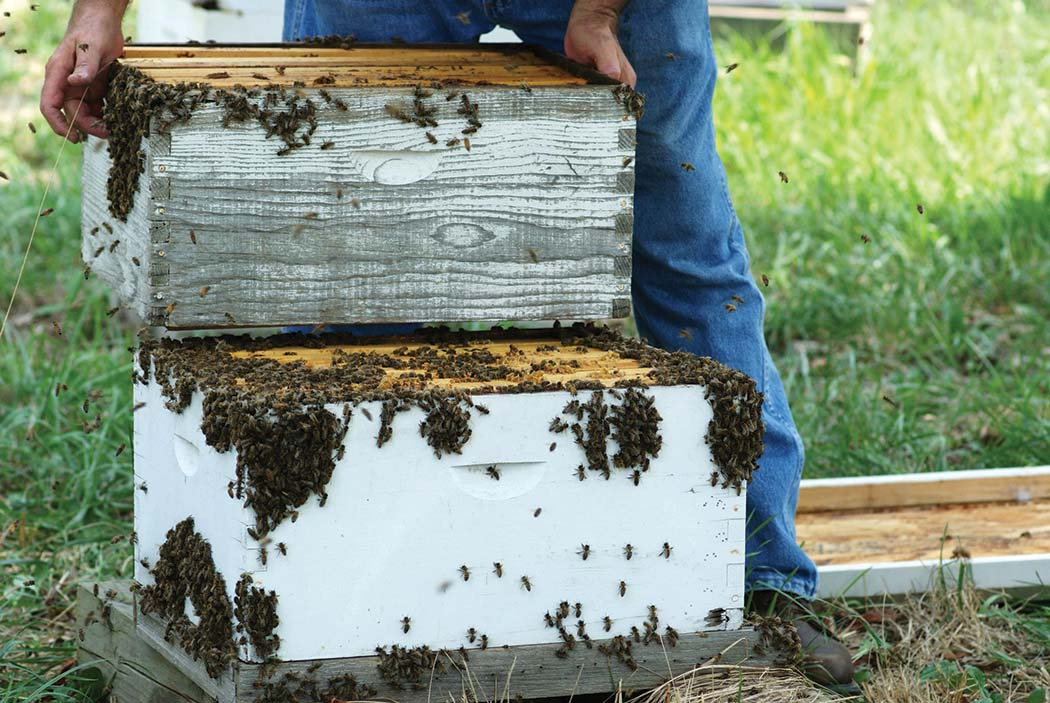 Lifting heavy hives. (Mary K. Parnell photo)