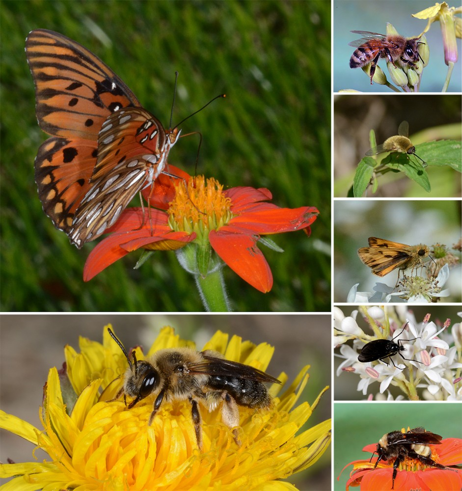 CATCH THE BUZZ – Clemson Research on Watermelons and Wildflowers Gaining Some Buzz