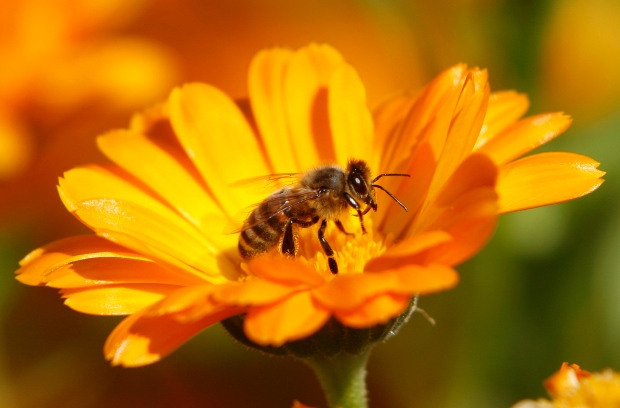Honey Nut Cheerios - BUZZ #2