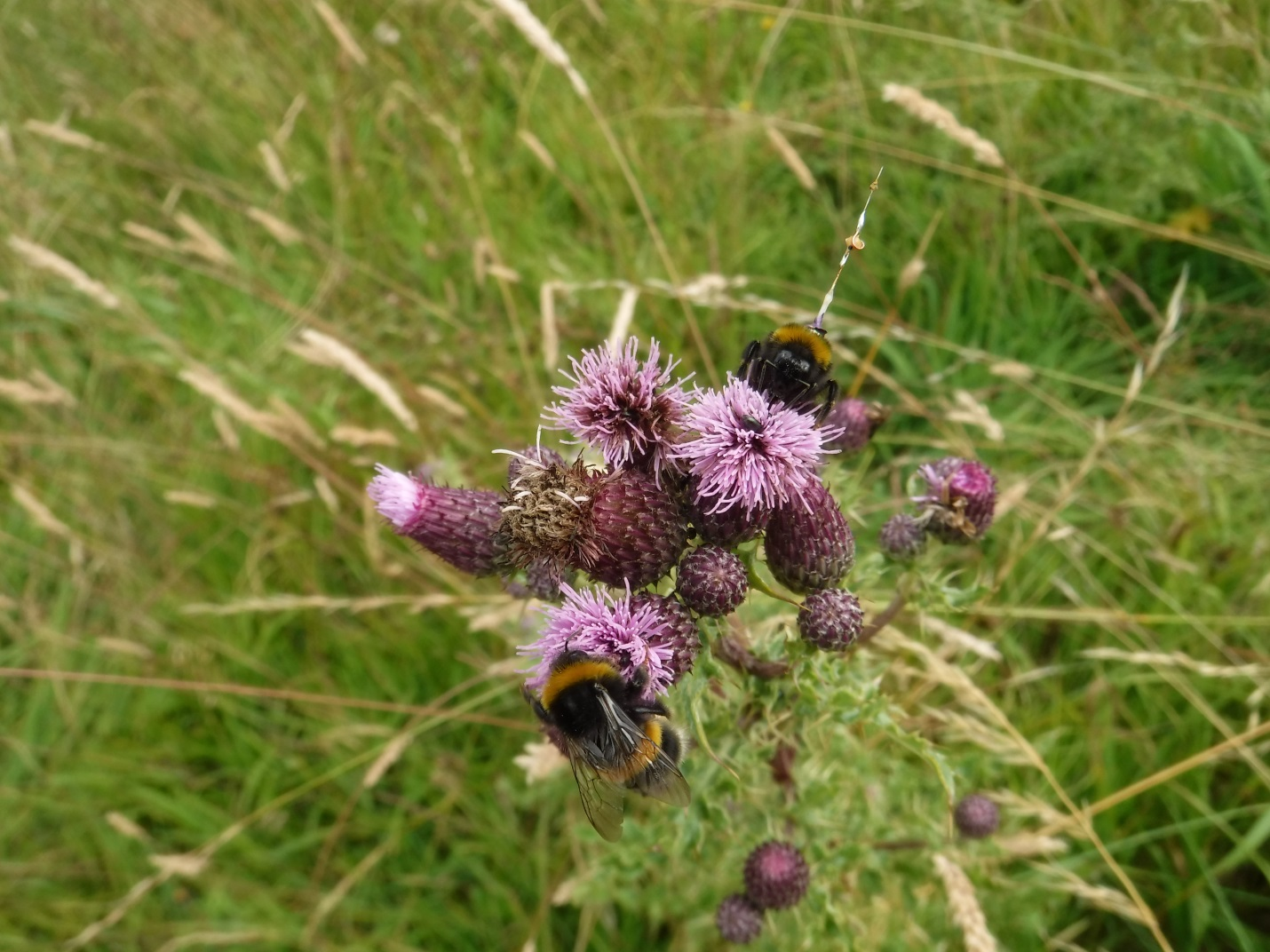 CATCH THE BUZZ – Selfish Bumblebees are Not Prepared to Share
